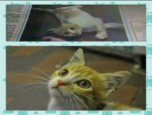 قطة مصرية ذهبت لتأكل من قمامة المطار فوجدت نفسها في إنجلترا..تفاصيل