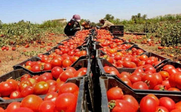 إسرائيل تهدد الفلسطينيين بوقف إدخال المنتجات الزراعية ..  فماذا سيكون رد الحكومة؟