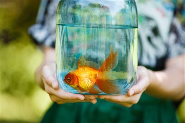 رؤية السمك في المنام رزقة حقيقية أم خرافة ..  لنكتشف معاً!