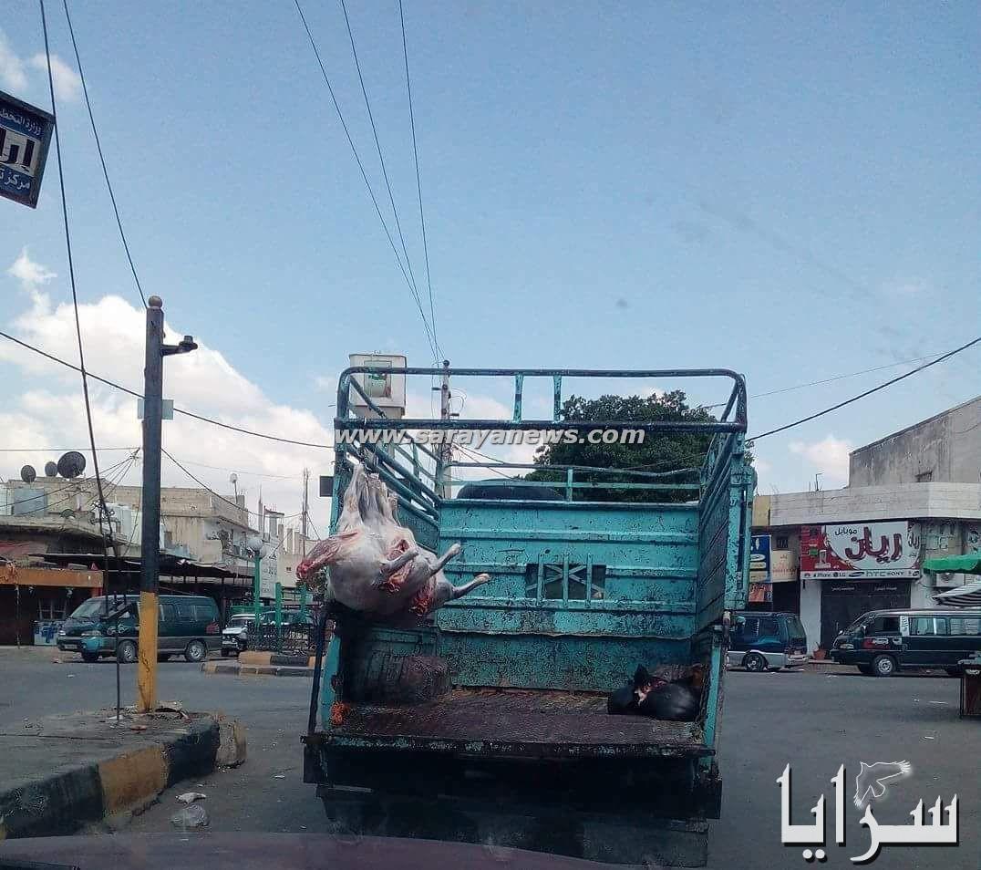 الشونة الشمالية نقل اللحوم بسارات مكشوفة .. صورة