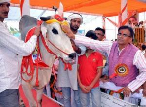 إجبار اثنين من المسلمين على أكل روث البقر في الهند عقابا لهما على تهريب لحومها