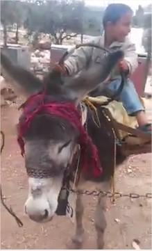 """اردني يستغني عن مركبته ويركب حمارا بمواصفات عالية تضامنا مع المقاطعه """" فيديو"""""""