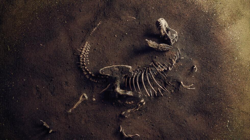 جلد متحجر يكشف لأول مرة عن شكل ديناصورات نادرة آكلة للحوم