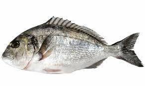 ماذا تعني عضة السمك في المنام