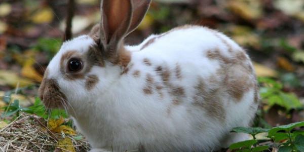 """""""إيبولا الأرنب""""  ..  فيروس مميت ينتشر بسرعة في أمريكا"""
