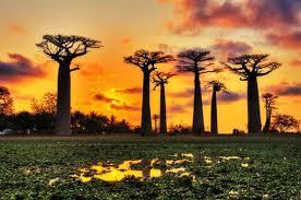 بالفيديو ..  تعرفوا على مدغشقر والتي يصنفها خبراء السياحة بالقارة الثامنة!
