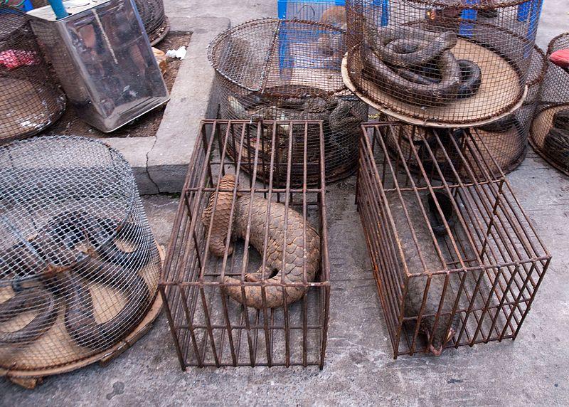 أكثر من 47 ألف حيوان حي كانت تباع في أسواق ووهان الصينية قبل كورونا