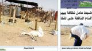 السعودية : إلقاء القبض على آسيويين يبيعون أغناماً نافقة