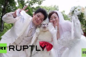 حيوان يحمل خاتم الزفاف باليابان (فيديو)