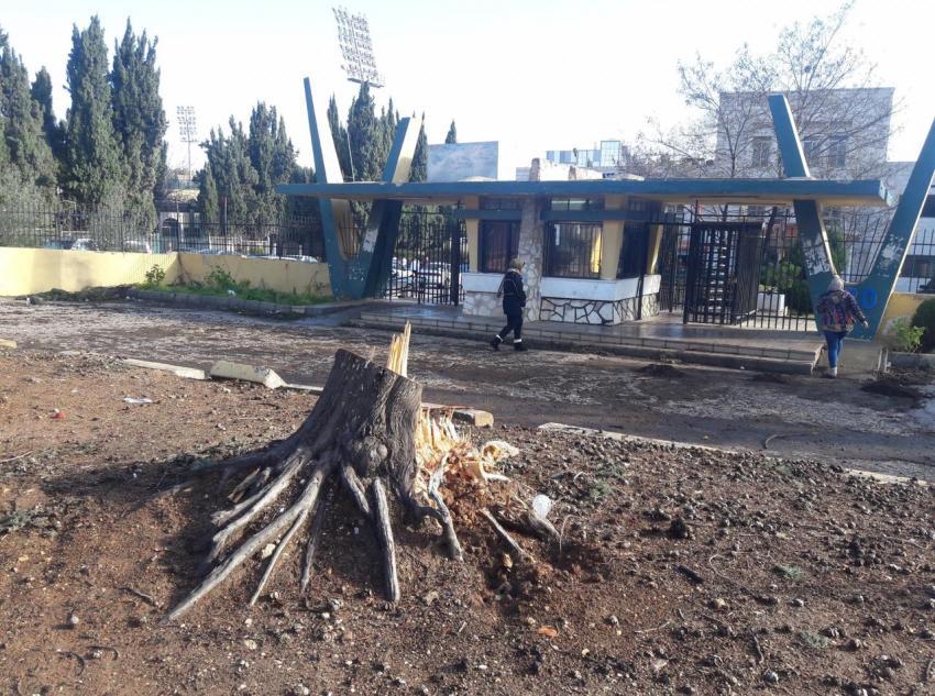 """بالصور  ..  قطع اشجار معمرة في محيط """"الاردنية""""  ..  بسبب الباص السريع"""