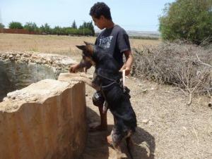 بالفيديو والصور .. كلبة تنقذ سيدتين من الغرق بعد ان سقطتا في بئر ماء