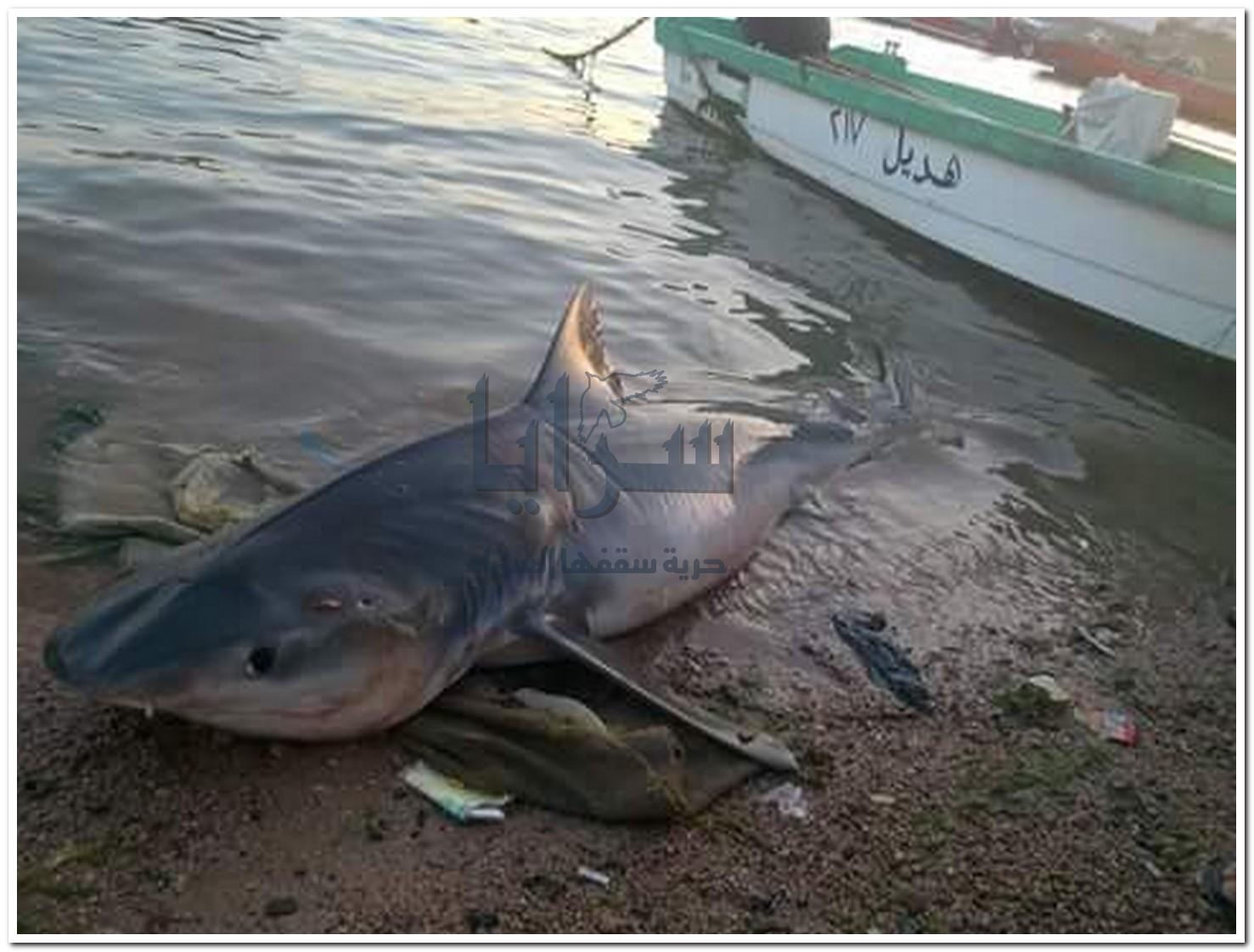 بالصور ..عقباوي يصطاد سمكة 10-05-2015