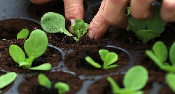 العثور على نبات يتغذى على الضباب