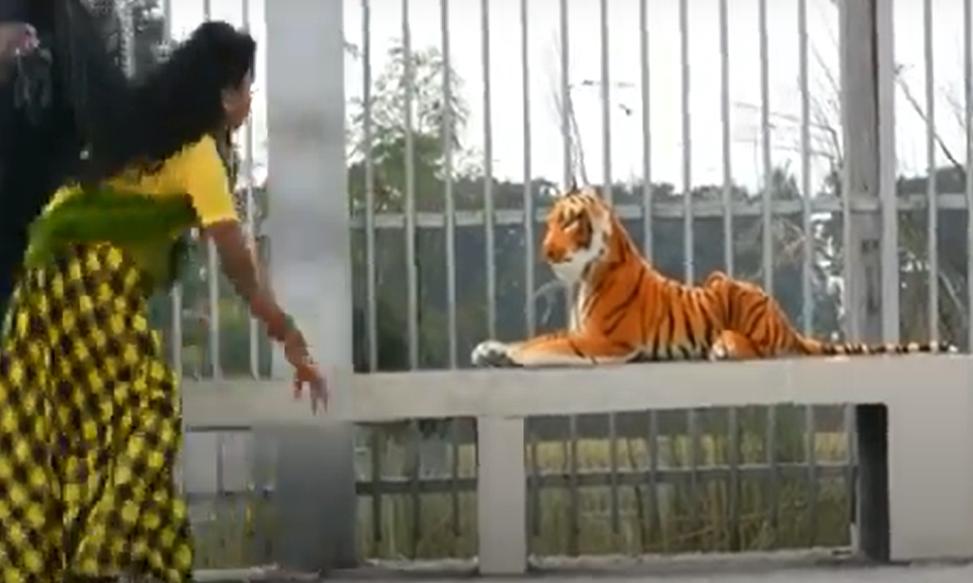 بالفيديو  ..  مقلب النمر