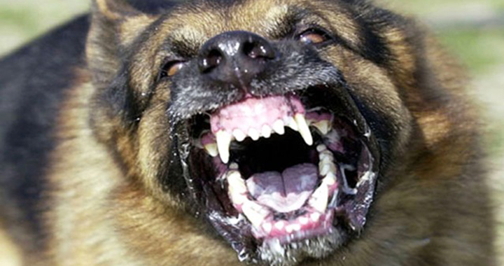 كلب ضال يعقر طفلا بالمفرق وسط شكاوى متكررة من انتشار الكلاب الضالة