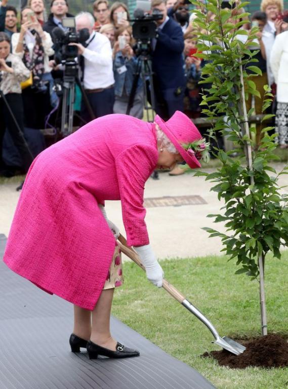 الملكة إليزابيث تضرب بالفأس في تأكيد منها على أنها ما زلت قادرة تماماً على زراعة شجرة