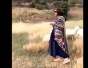 بالفيديو  ..  احلام ترعى الاغنام في السعودية