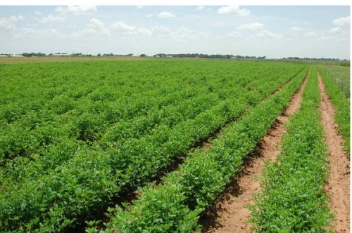30 ألف مزارع يستفيدون من تأجيل القروض