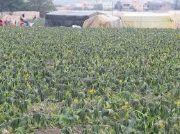 الحكومة تدعو المزارعين لمتابعة نشرات الطقس