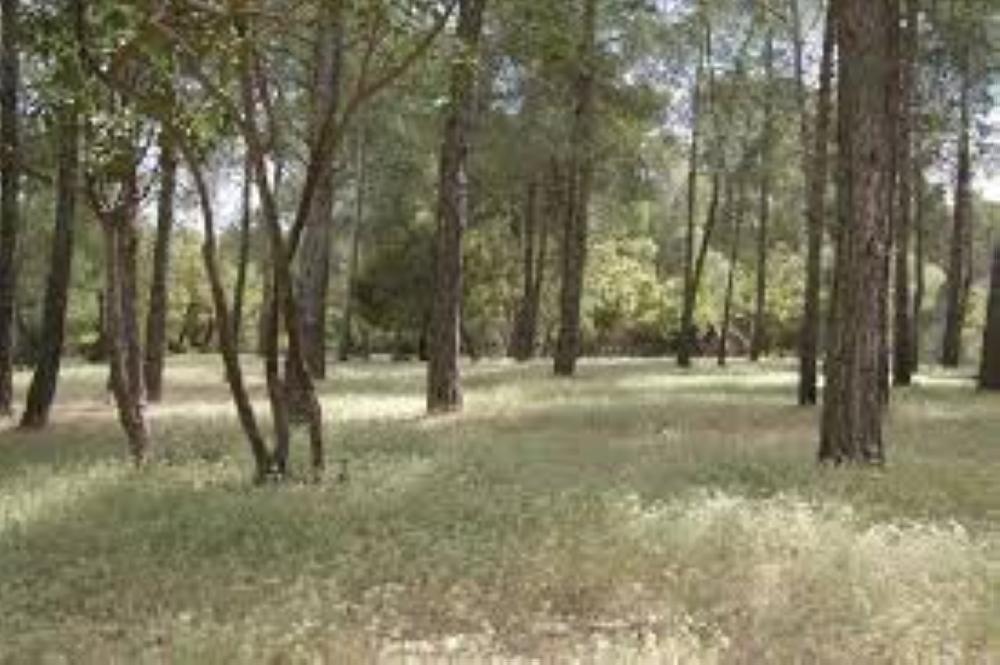 جرش: ترشيح محمية غابات دبين لمحميات القائمة الخضراء