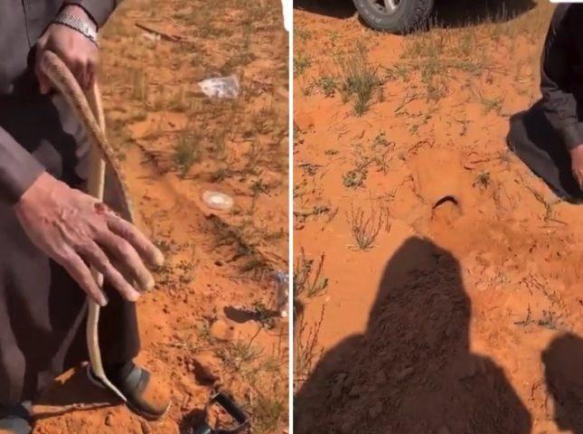 شاهد لحظة إخراج ثعبان ضخم من داخل حفرة بالرمال