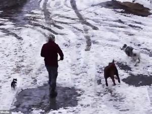 بالفيديو ..  حادثة نادرة ..  كلب ينقذ آخر من الموت دهسا!