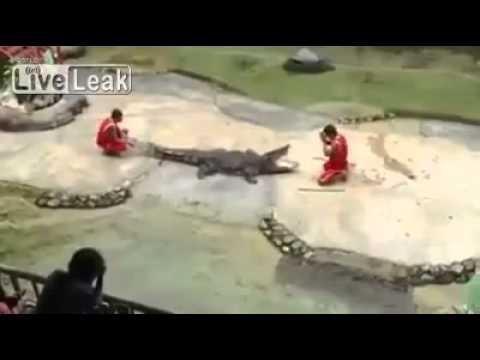 فيديو..التمساح كاد ان يقطع راس مدربه - سبحان الله - لايفوتك