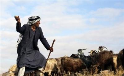 """11 اصابة بإعتداء على موظفي """"الزراعة"""" في اربد"""