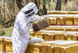 تراجع إنتاجية الأردن من العسل خلال الموسم الحالي