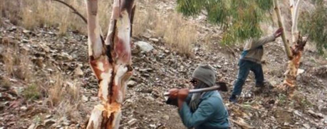 ضبط وتحرير 595 قضية مخالفات بيئية في عجلون