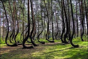 بالصور ... تعرف على اغرب شجرة في العالم