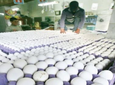 التجار: مستعدون لتأمين البيض بأقل من 3 دنانير