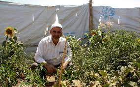 الزعتري : لاجئون يزينون أماكن إقامتهم بإنشاء الحدائق