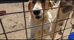 بعد نشر سرايا بالوثائق  .. وقف العمل بقرار 10 دنانير لكل من يصطاد كلبا