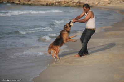 بالصور ..  فلسطيني يدرب كلابه على انقاذ الغرقى من البحر