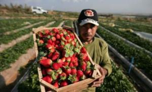 85 الف طن خضار وفاكهة صدرها الأردن
