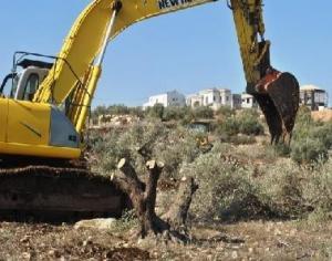 مستوطنون يعدمون عشرات الأشجار المثمرة جنوب بيت لحم