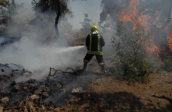 الحكومة: نحو 500 حريق اندلع خلال العام الحالي بمناطق حرجية و غابات