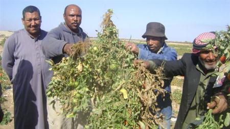 مزارعون يهددون بايقاف توريد الخضروات والفواكه الى عمان والبلديات