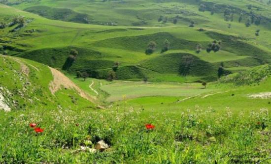 حركة سياحية داخلية نشطة للتمتع بجماليات الربيع الأردني