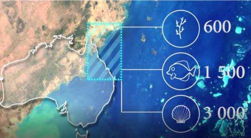 الحاجز المرجاني العظيم مهدد بالاختفاء