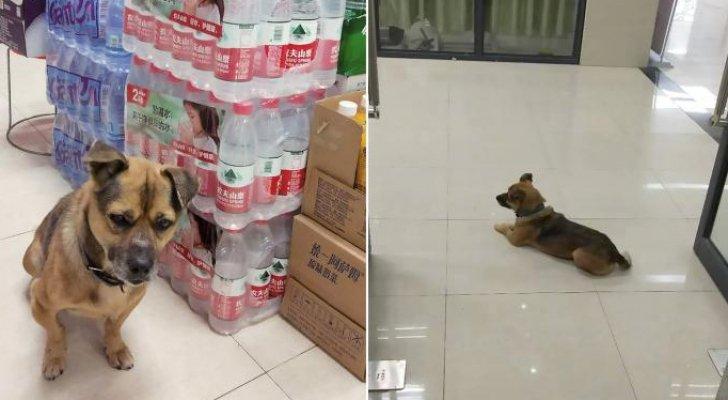 """كلب """"وفي""""ينتظر في المستشفى 3 أشهر بعد وفاة صاحبه بكورونا"""