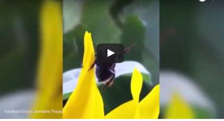 مدهش شاهد نحلة تلوح بيدها image.php?token=cb28ce5968cdd605b63baa06706f99f4&size=