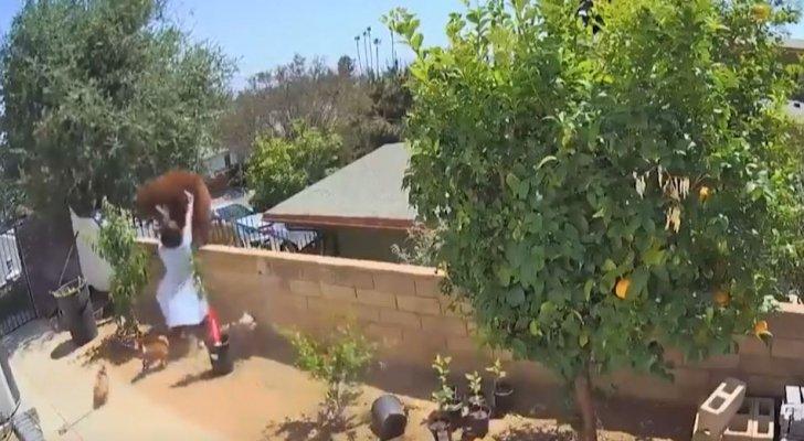 فتاة تهاجم دبا بيديها دفاعا عن كلابها