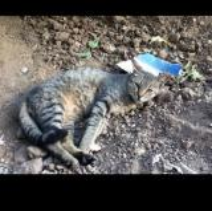 """فضلات """"قطة"""" تتسبب بتسرب اشعاعي !"""