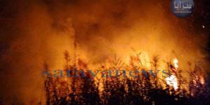 بالفيديو والصور ..  حريق كبير يلتهم مساحات واسعة من الأراضي الزراعية بالأغوار الشمالية