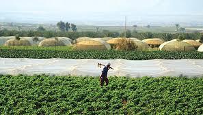 بشرى سارة للمزارعين الاردنيين : خفض أجور رش المبيدات لدعم القطاع الزراعي
