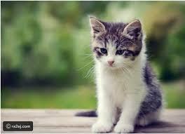 كيف أخبر ابنتي بوفاة قطتها المفضلة؟