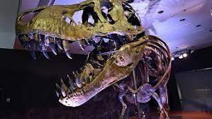 توقعات بسعر خيالي ..  مزاد على هيكل عظمي لديناصور في نيويوروك