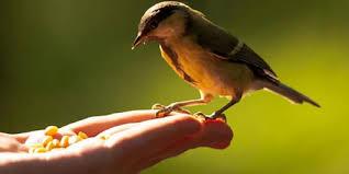 تفسير حلم اطعام العصافير